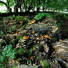 Wild Funghi II by JamesTH