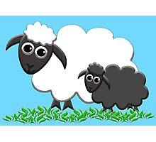 Baby Black Sheep with Ewe Mom Photographic Print