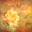 Scattered Rose by DottieDees