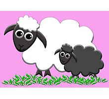 Black Sheep Lamb & Mom in Pink Photographic Print