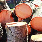 Tree Slices by Arvind Singh