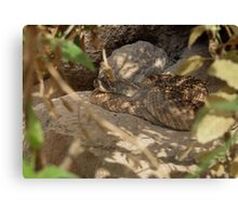 Western Diamond-backed Rattlesnake Canvas Print