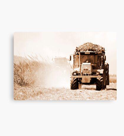 Sugar cane harvest - far north Queensland Canvas Print
