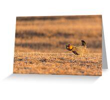 Golden Light On The Prairie Greeting Card