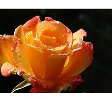 Classic Rose Photographic Print