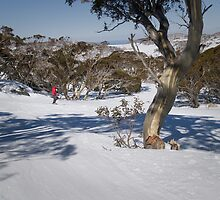 Skier, Snowy Mountains, Australia by DBigwood