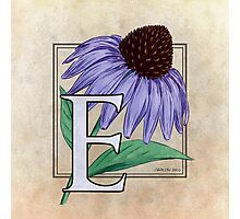 E is for Echinacea - full image Photographic Print