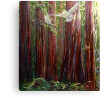 OLD GROWTH AND  SNOW OWLS Canvas Print