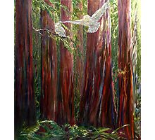 OLD GROWTH AND  SNOW OWLS Photographic Print