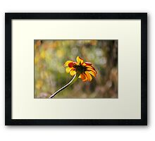 Exquisite Framed Print