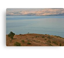 Cows at observation point Canvas Print