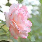 Rose IV by Tanja Katharina Klesse