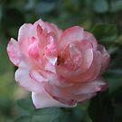 Rose V by Tanja Katharina Klesse
