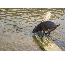 Not The Brightest Terrier On The Lake Photographic Print