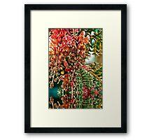 Reflective Nature .... Framed Print