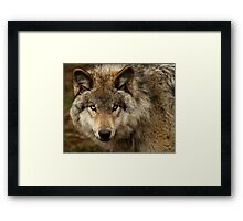 Undivided attention Framed Print
