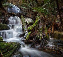 Myrtle Gully Falls, Hobart #11 by Chris Cobern