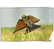 Rainbow Bee-eater  88 Poster
