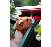 Hamster in the Garden Photographic Print