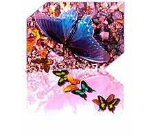 Butterfly stream Photographic Print