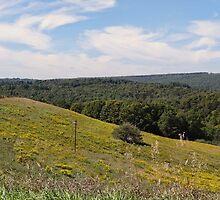 A Golden Hillside by vigor