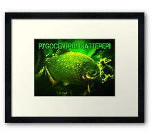 Piranha (XL Poster) Framed Print
