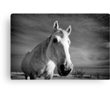 Our Mare Stormy Canvas Print