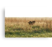 Lab in Field Canvas Print