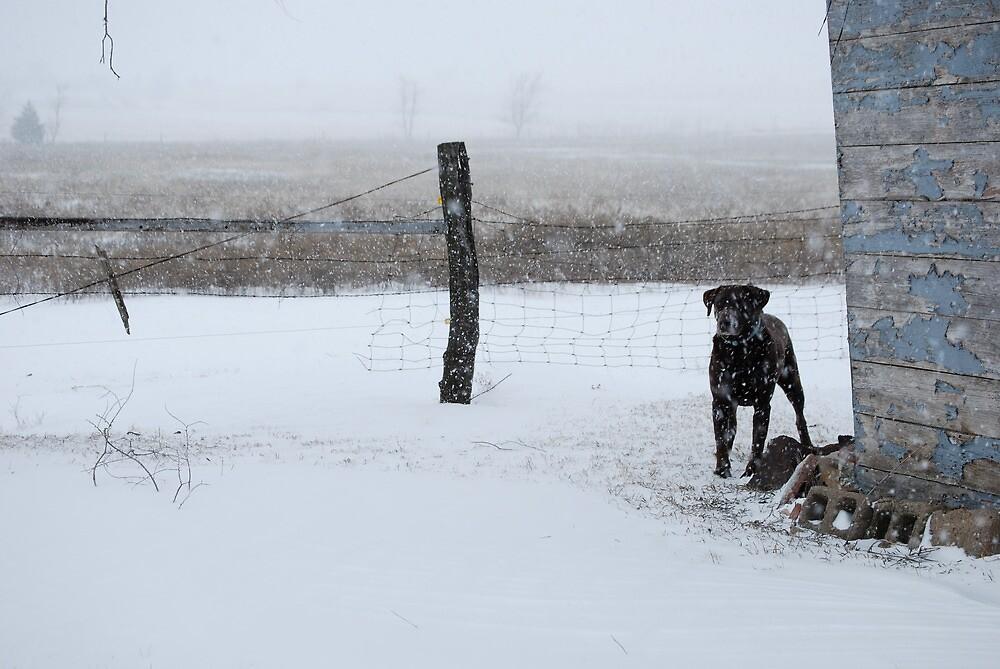 Snowy Labrador Retriever by Suz Garten