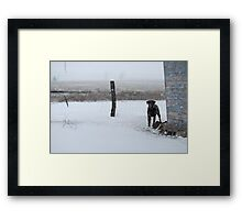 Snowy Labrador Retriever Framed Print