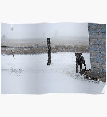 Snowy Labrador Retriever Poster