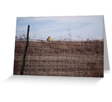 Meadowlark on Fence Greeting Card
