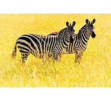 Two Zebras Photographic Print