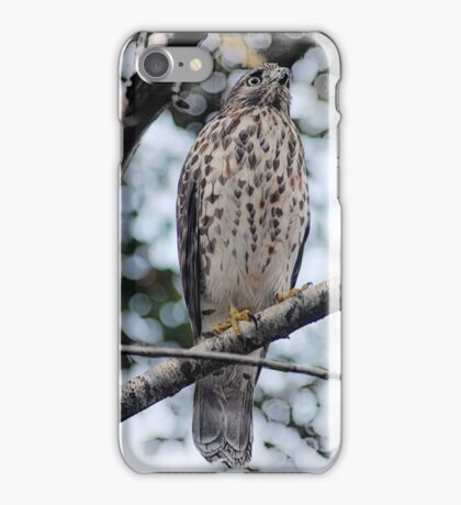 Hawk waiting for prey iPhone Case/Skin