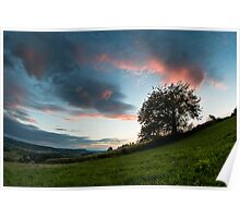 Tree sunset Poster