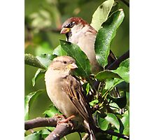 Mr. and Mrs. Sparrow Photographic Print