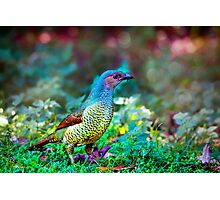 Rainbow Bower... Photographic Print
