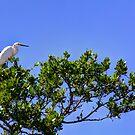 Heron in Tree by njordphoto