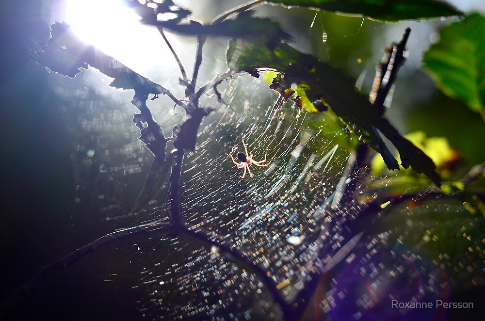 Spider by Roxanne Persson