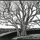 Solitary, A Tree Ink Drawing by Danielle Scott