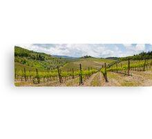 The Vineyard Panorama Canvas Print