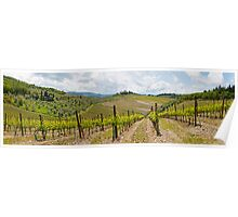 The Vineyard Panorama Poster