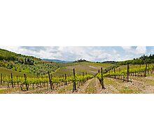 The Vineyard Panorama Photographic Print