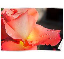 Rose Drops Poster