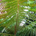 Giant Ferns - Lost Gardens of Heligan by kathrynsgallery