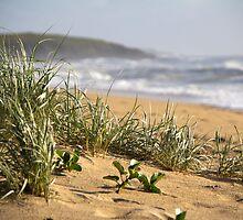 North Sapphire Beach by Carolyn Boyden