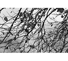 Autumn in Oklahoma City Photographic Print