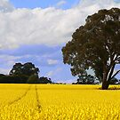 Yellow Fields by Maureen Clark