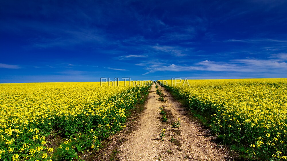 """""""Amid The Fields Of Gold"""" by Phil Thomson IPA"""