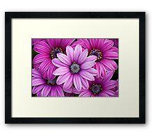 The Purple Five Framed Print